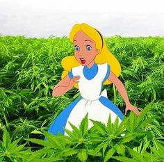 In my Green Wonderland Cartoon Profile Pictures, Cartoon Pics, Cartoon Art, Trippy Cartoon, Rastafarian Culture, Overlays, Marijuana Art, Stoner Art, Dark Disney