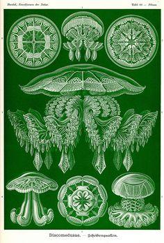Ernst Haeckel ~ Art Forms in Nature