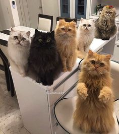 Kittens So Cute - Funny Cats tuesday, october 22 Funny Cats, Funny Animals, Cute Animals, Baby Animals, Crazy Cat Lady, Crazy Cats, I Love Cats, Cool Cats, Kittens Cutest