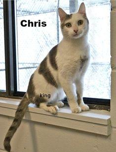 Meet Chris TOHCS@LittleShelter.com (631) 651-9788