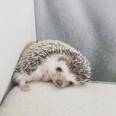 Baby hedgehog on corner of a window