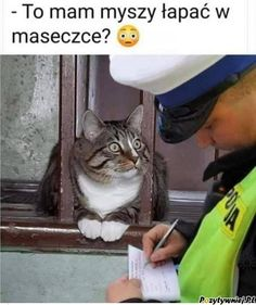 So I have to catch a mouse with a mask? Funny Spanish Memes, Stupid Funny Memes, Funny Animal Memes, Funny Cat Videos, Cute Funny Animals, Wtf Funny, Funny Cats, Funny Quotes, Lol Memes