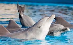 5 Great Reasons to End Dolphin Captivity http://www.care2.com/causes/5-great-reasons-to-end-dolphin-captivity.html