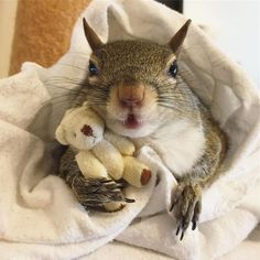 Rescue Squirrel Holding A Miniature Teddy Bear Is The Cutest Thing - World's largest collection of cat memes and other animals Squirrel Pictures, Funny Animal Pictures, Cute Funny Animals, Cute Baby Animals, Animals And Pets, Wild Animals, Fox Pictures, Puppy Pictures, Animal Pics