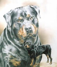 colorful pictures of rotties | Rottweiler oil painting in the Shadow Image