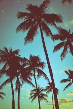 Vintage Tropical Palms Fotoprint