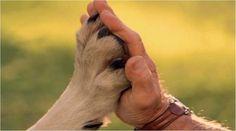 Yavru Köpek Seçimi