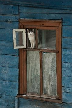 I've heard of cat doors.but a designated cat window! Crazy Cat Lady, Crazy Cats, I Love Cats, Cute Cats, Funny Cats, Cat Window, Window View, Window Frames, Photo Deco