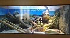 Amazing reptile habitat accessories to decorate reptile home!