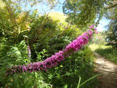 Jardín Botánico de Isla teja, Valdivia