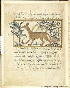 Bestiary, MS M.500 fol. 22r - Images from Medieval and Renaissance Manuscripts - The Morgan Library & Museum
