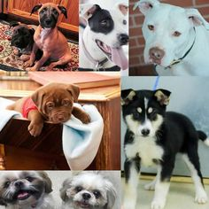 Dogs for adoption or sale in North Carolina http://www.doggielife.com/dogs?rids=32&p=1