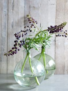 lupiner - love these glass vases too