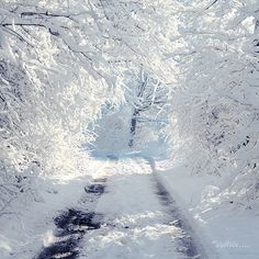 WiNTER ❄ COUNTRY LANE