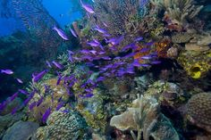 Belize Barrier Reef is on the list of The Seven Underwater Wonders of the World drawn up by CEDAM International.