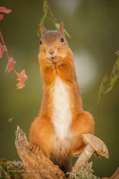 direct look by geertweggen #animals #animal #pet #pets #animales #animallovers #photooftheday #amazing #picoftheday