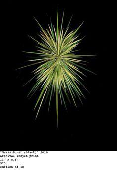 """stephen eichhorn, """"grass burst (black)"""" (2010)"""