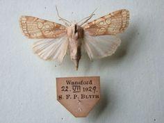 Wing markings