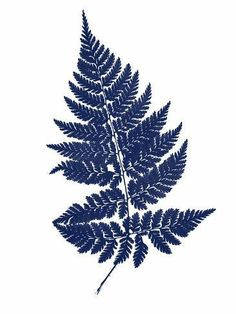 Giclee Print: Blue Fern on White by Chaos & Wonder Design : White Prints, Blue Aesthetic, Stretched Canvas Prints, Wall Art Designs, White Art, Metal Wall Art, Lovers Art, New Art, Giclee Print