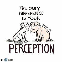 A única diferença é a sua percepção