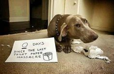 These 20 Dogs Were Busted in the Act. Now They're Being Hilariously and Adorably Shamed.