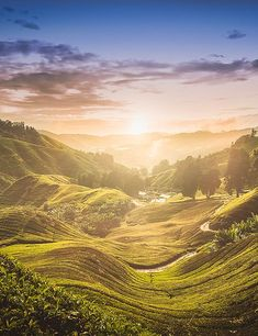 Rolling Hills of Tea Plantation  | Fresh Herbs | Herbalism | Nature Photography