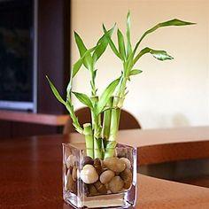 centros de mesa con bambu para boda - Buscar con Google