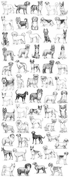 dogs dogs dogs by ~aj00 on deviantART #DogDrawing