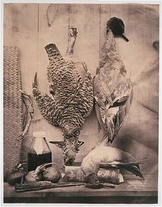 Still life - birds  by F.E. Currey, 1861-80