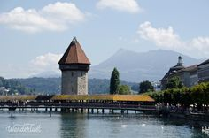 Swans in the lake in Luzern