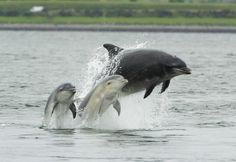 Awesome Ocean's Sea Dog takes you back in time to explore the Natural History of Dolphins.