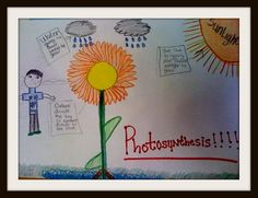 Photosynthesis pictures