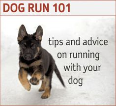 Runner's World tips for running with your dog.