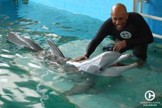 Montel Williams, television personality and talk show host came by to meet Winter the dolphin.