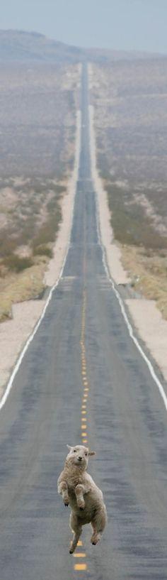 How I feel about our roadtrip. . .   Photo comique et très jolie! :-D