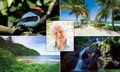 The Caribbean island of Tobago is a haven luring the likes of David Attenborough | Daily Mail Online