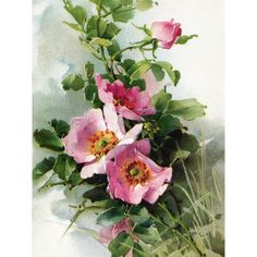 Tattoo Rose Vintage Flowers Catherine Klein 37 Ideas For 2019 Catherine Klein, Art Floral, Flower Images, Flower Art, Flower Prints, Watercolor Flowers, Watercolor Paintings, Watercolors, Pink Dog