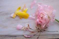 lisbon flowers