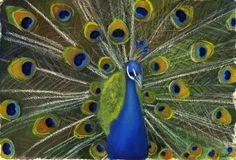peacock-splendor-lori-presthus.jpg 600×409 pixels
