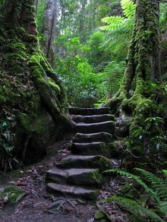 Stairway through Rainforest. Blue Mountains National Park World Heritage Site in , Beautiful Forest, Beautiful Places, Magical Forest, Forest Path, Dark Forest, Château Fort, Nature Aesthetic, Mystique, Foto Art