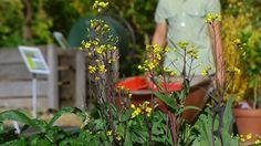 Gardening Australia - Fact Sheet: Good Companions || Companion planting for veggie patch