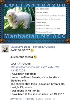 SAFE❤️❤️ 2/21/17 PLEASE HURRY HER TO A PROPER VET !! THANK YOU! SUPER URGENT 02/21/17 Manhattan Center LULI – A1104208 FEMALE, WHITE, POODLE STND MIX, 6 yrs STRAY – STRAY WAIT, NO HOLD Reason PET HEALTH Intake condition UNSPECIFIE Intake Date 02/19/2017, From NY 10458, DueOut Date 02/22/2017, http://nycdogs.urgentpodr.org/luli-a1104208/