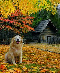 Smoky Mountain Golden ~ Photos Hub