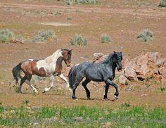 Beautiful Stallions