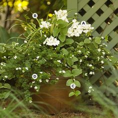 The All-White Look... White offers a fresh, clean look that blends with everything. And because it reflects light, white flowers are a fantastic choice for containers you primarily view in the evening. [click link for plant info]