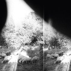 Godspeed You! Black Emperor Announce New Album Asunder, Sweet and Other Distress