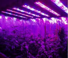 LEDHYDROPONICS is one of the industry leaders in LED grow light technology. Since 2008 we have been at the forefront of LED grow lights, investing time and money into led development.