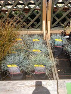 Decorative grass 3