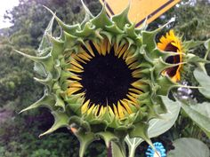 Expressive sunflower.