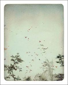 Rebecca Dautremer - Illustration - Soie